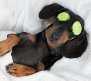 dog relaxing with cucumbers on eyes